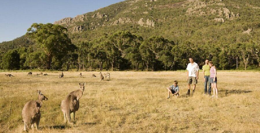 Grampians - Kangaroo