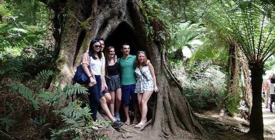 Otway Rainforest on the Great Ocean road Tour