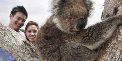 2 Day Great Ocean Road & Phillip Island Tour $265