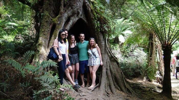 the otway rainforest
